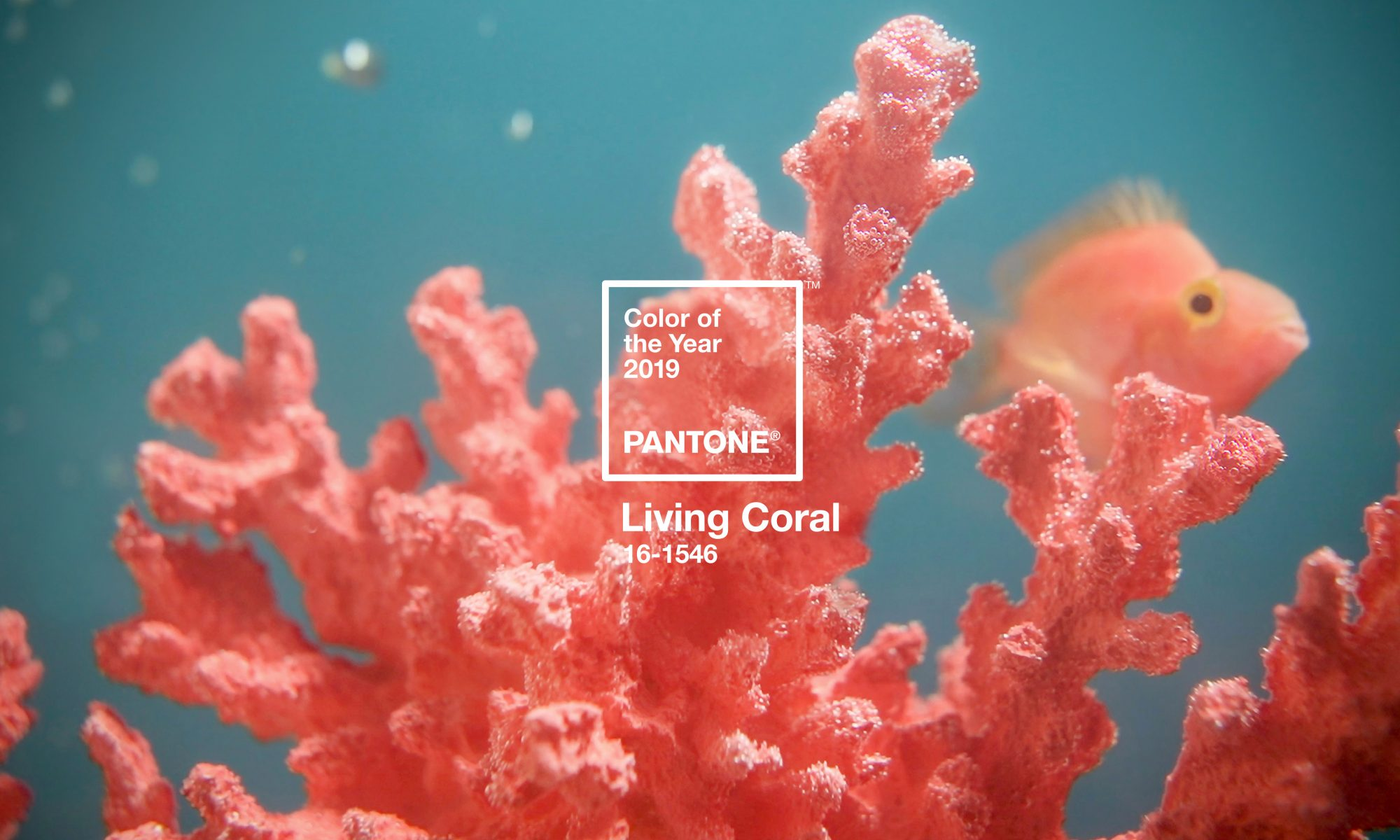 PANTONE-Color-of-the-Year-2019-living-coral- LIVING CORAL couleur Pantone de l'année 2019